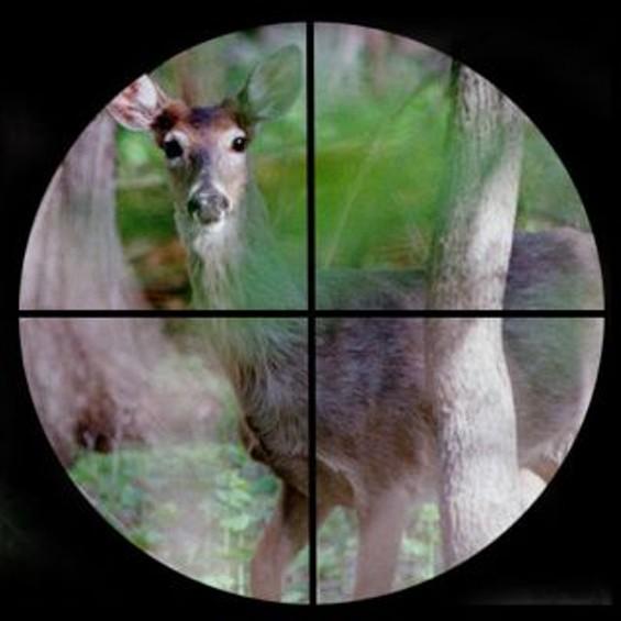 deer_crosshairs.jpg