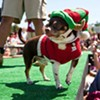 Cute Dogs in Costume: The Whole Enchihuahua