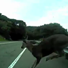 Cyclist and Deer Collide on Marin Road (VIDEO)