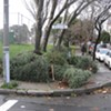 Dead Trees Littering SF Streets Not Created Equally - Too Many Branch Offices in SF, Not Enough Wood Chippers