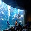 Steinhart Aquarium Staff Braved Dangers Off the Philippines to Get 250 New Species