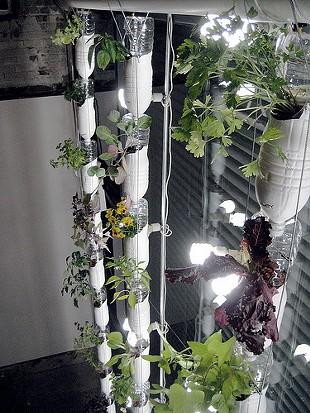 DIY salad for landless urbanites. - BRITTA AND REBECCA/FLICKR