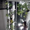 Grow Food On Your Window (And By 'Food,' We Don't Mean Mildew)