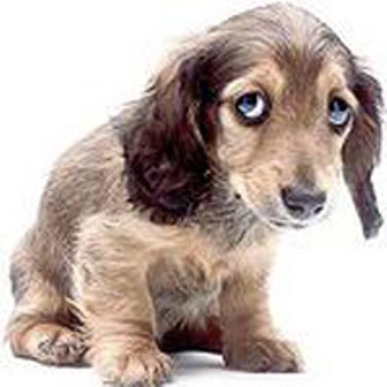 smsad_dog_resized_thumb_300x300.jpg