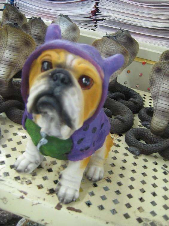 hoodie_dog.jpg