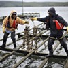 In Pictures: Drakes Bay Oyster Company at Work