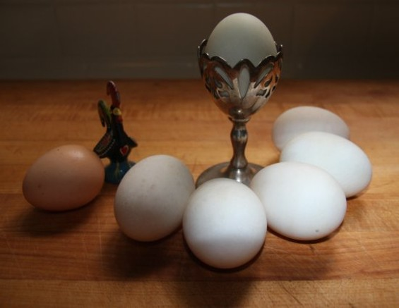 Duck Eggs (R) vs. Chicken Egg (L) - BEN NARASIN