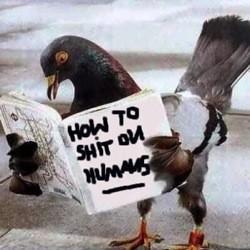 pigeon_shit.jpg