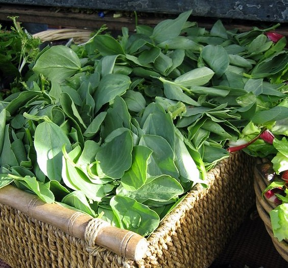 Fava greens at the Saturday Ferry Plaza market, $6 per pound. - CUESA