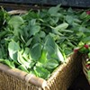 No. 27: Fava Greens from Tairwa'-Knoll Farms