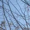 Flash: Live, Denuded Penis Tree