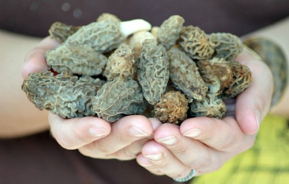 Food editor Anna Roth is looking forward to some mushroom foraging in 2013. - FLICKR/CARLY & ART