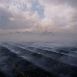 LARRY  SCHWARM - Furrows after sugar cane fire near Thibodaux, - Louisiana, 2004.