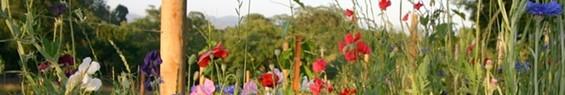 flower_banneralysian.jpg