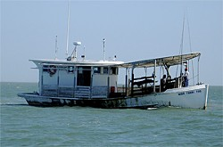 ROBB WALSH - Get them while you can: Hurricanes have limited the Gulf oyster harvest.