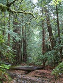 Get to know Muir Woods' creeks very, very - well.
