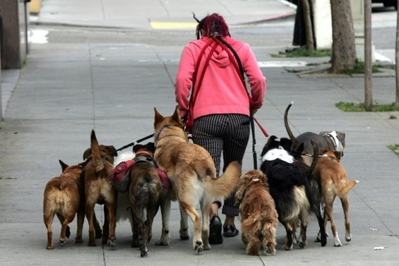 Giving them something to bark about - MIKE KOOZMIN/SF EXAMINER