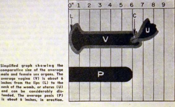studies_in_crap_sex_organ_size_chart.jpg