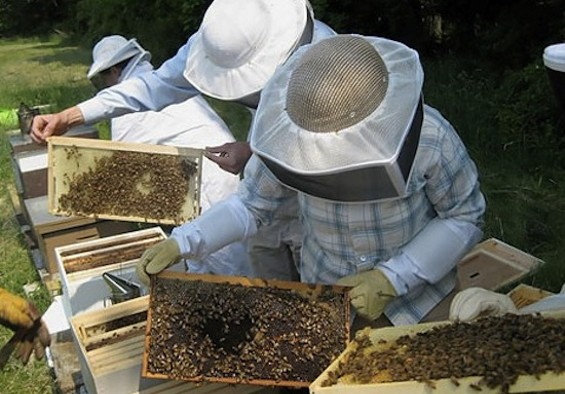 Howabout a career in beekeeping?