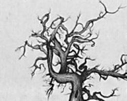 """IAN  JOHNSON - I am a sick tree ... i am a wicked tree at """"The - Tree Show."""""""