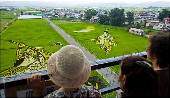 """Images are """"painted"""" using thousands of rice plants genetically engineered to have different hues. - SHIHO FUKADA/NEW YORK TIMES"""