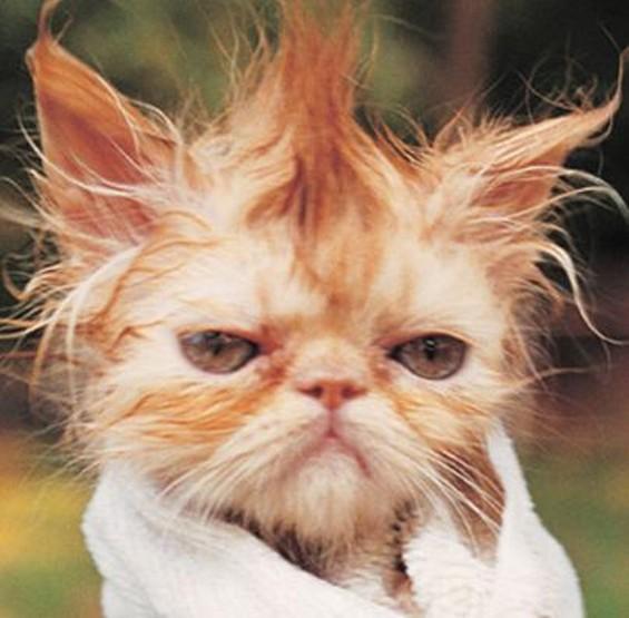 sad_wet_cat.jpg