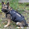San Francisco Police Dogs to Model New Custom-Fit Bullet-Proof Vests