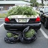 Cops Raid Pot House First, Ask Questions Later