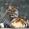 James Dickson, Endangered Species Trafficker, Gets Six Months in Jail