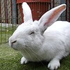 Screw Bluegrass and Sailboats, This Weekend's Hottest Event Is Bunny Adoption