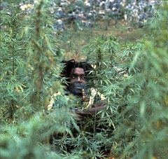 Kevin Reed may have been better off having his pot competition in the bushes