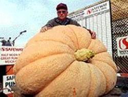 Kirk Mombert of Harrisburg, Ore., and his - 2002 prizewinning 1,173-pound Atlantic - Giant pumpkin.