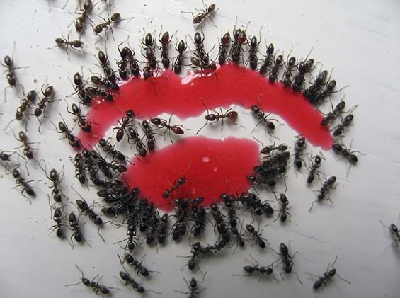 """Kiss you, Honey"" - COURTESY OF SU-CHEN HUNG"