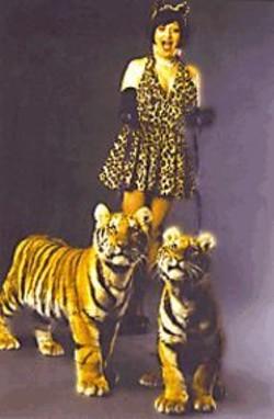 HOLLY  STEWART - Kitten on the Keys.