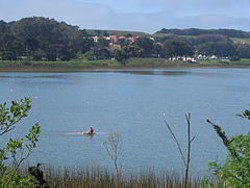 Lake Merced - ISABELL SCHULZ