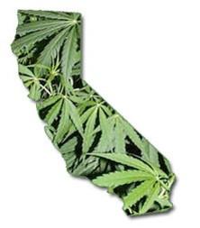 marijuana_california.jpg_thumb_222x252_thumb_222x252.jpeg