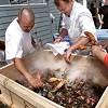 Lobster Bake, Meet Food Trucks
