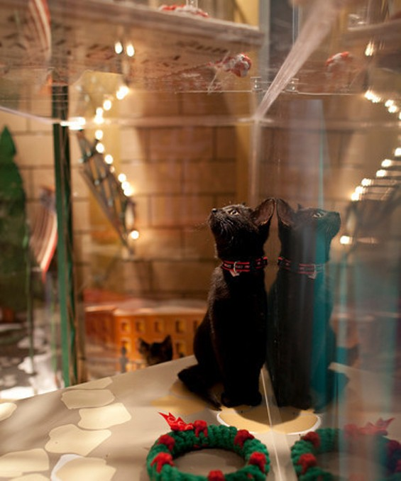 Macy's Holiday Windows are back with cute puppies and kitties - JENNIFER JAMIESON PHOTOGRAPHY AND SWEETHARDT PHOTOGRAPHY