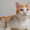 Iranian Cat Finds Better Life in San Francisco