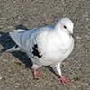 Man Attacks Elderly Woman Feeding Pigeons at U.N. Plaza