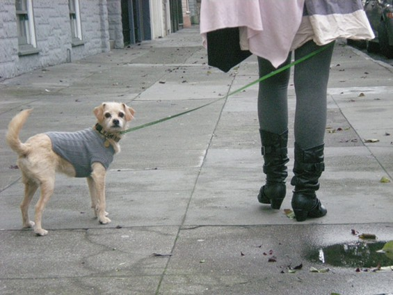 Matching grays with a dog is a kindly thing to do -- after all, they're colorblind - JOE ESKENAZI