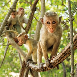 film6-monkeykingdom.jpg
