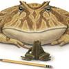 Monstrous Prehistoric Frog Ate Dinosaurs, Haunts Your Dreams