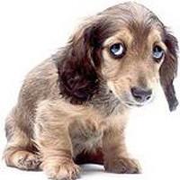 smsad_dog_resized.jpg