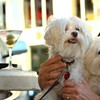 New Law Finally Makes It Legal to Bring Dogs Into Restaurants