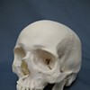 Human Skull Found on Paper Plate in Oakland