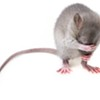 Of Mice and Estrogen: When It Comes to Aggression, Women May Not Be So Different From Men After All.