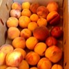 Day Trip Report: Peach Picking in Brentwood