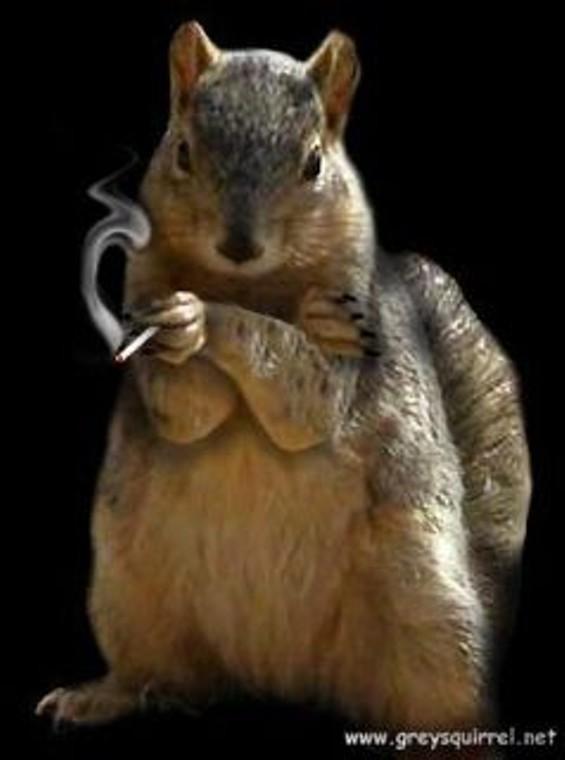 grey_squirrel.jpg