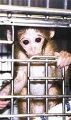 monkey_cage_07.jpg